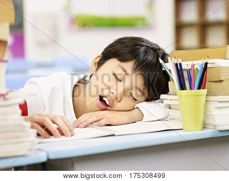 tired and exhausted asian primary school student falling asleep while studying