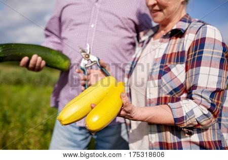 farming, gardening, agriculture, harvest and people concept - happy senior couple with squashes and secateurs at farm