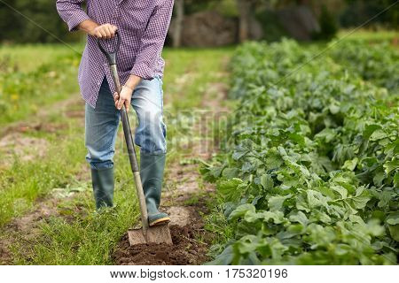 farming, gardening, agriculture and people concept - senior man with shovel digging garden bed or farm