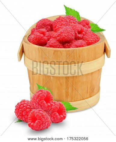 raspberries in a bucket isolated on a white background