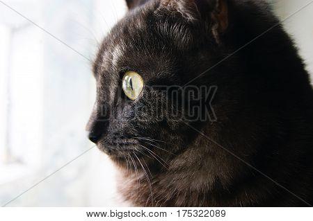 Cat, pet, erysipelas, look, portrait, mustache, eyes, green, life, pet