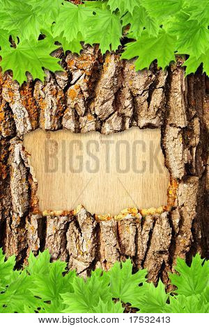 Background with bark and green maple leaves