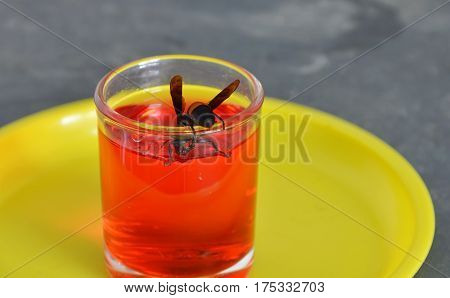 hornet feeding on red nectar in the glass