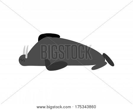 Sleeping Walrus. Seal Arctic Animal Sleeps. Sleepy Wild Beast