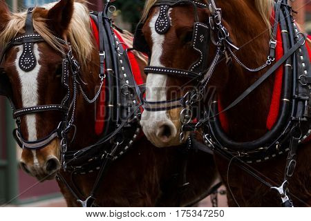 Horse-drawn Wagon Ride