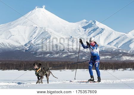 Skijoring On Background Of Avacha Volcano In Kamchatka