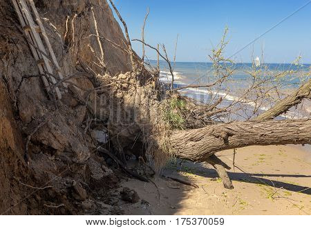 trees fell on the coast after landslide