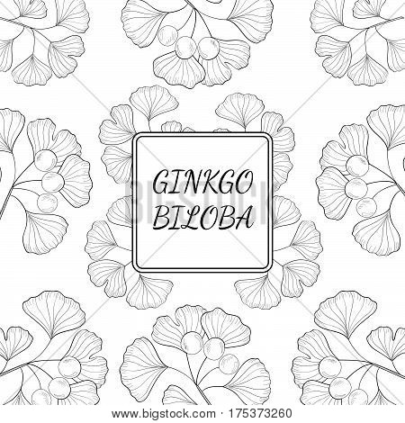 Ginkgo Biloba plant leaf branch berry. Background medicinal plant. Hand drawn sketch illustration. Ingredient for hair and body care cream lotion treatment.