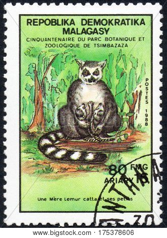 UKRAINE - CIRCA 2017: A stamp printed in Malagasy Madagascar shows Ring-tailed lemur with calves Lemur Catta serie Fiftieth anniversary of the botanical and zoological park of Tsimbazaza circa 1988
