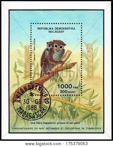 UKRAINE - CIRCA 2017: A stamp printed in Malagasy Madagascar shows Lesser Bamboo Lemur Hapalemur griseus serie Fiftieth anniversary of the botanical and zoological park of Tsimbazaza circa 1988