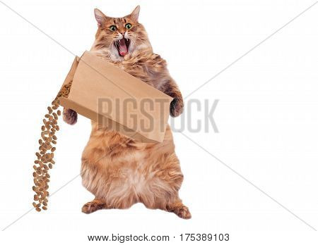 The Big Shaggy Cat Is Very Funny Standing.number 7