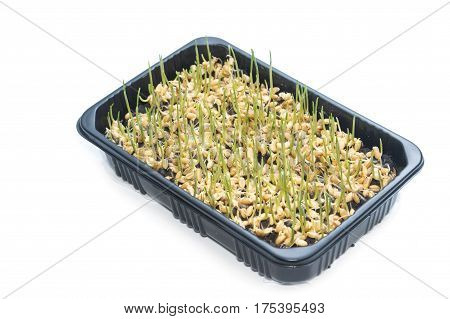 Plastic Container With Young Green Sprouts,isolated On A White