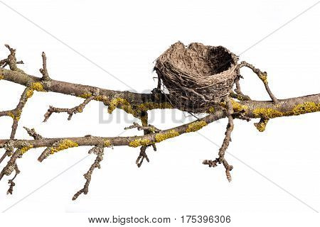 Abandoned nest on the old tree branch, isolated on white background. Empty Bird Nest.