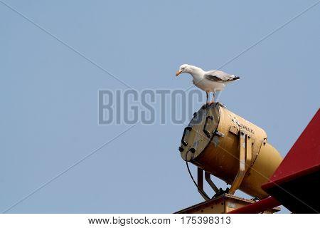 Netherlands,waddenzee-june 2016: Seagulls follow the ferry betweeen Holwerd en Ameland