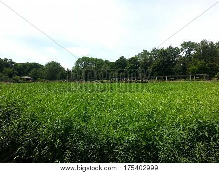 vast open meadow of plants nature in summer
