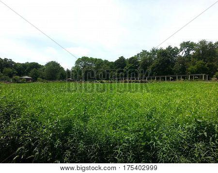 vast open meadow of plants nature in summer