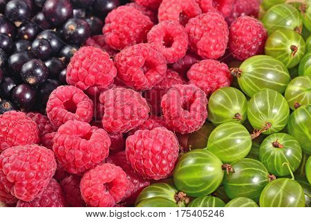 Various Kinds Of Fresh Berries Close Up As Background