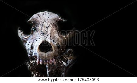 Dog Skull in forest Scary grunge . Halloween background. value angel of death. slayer SPOOKY