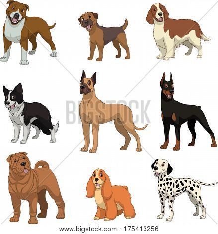 Vector illustration set of funny purebred dogs on a white background