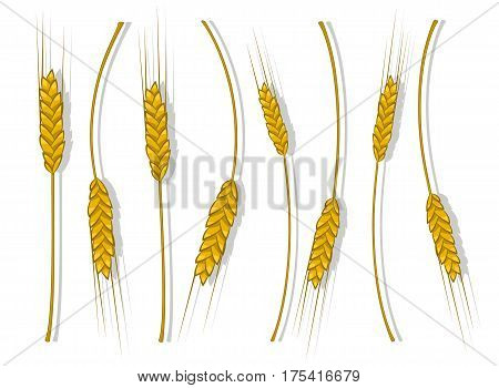 Spikes Of Wheat, Barley Or Rye Are Woven Into One Bundle