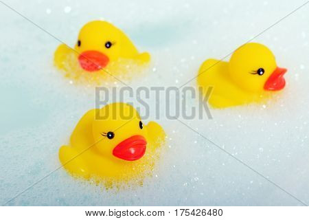 rubber ducks in foam