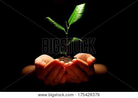 Hands holding sapling in soil on black