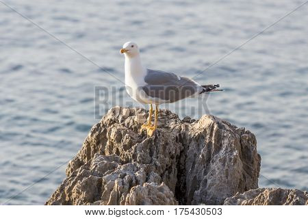 Seagull Resting On The Rocks At Sea