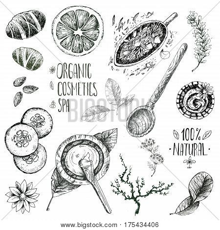 Hand drawn vector set, organic cosmetics, spa. Natural herbal products, citrus, cucumber, zucchini, flower petals, chamomile almond Vintage engraving sketchy style