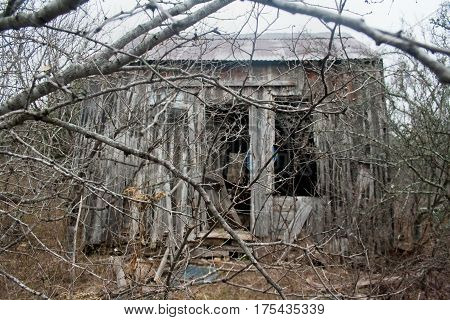 An old wooden shack falling apart in the woods after being abandoned.