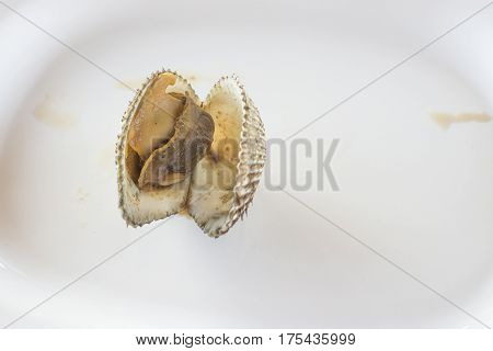 Close up raw blood cockle isolated on white bowl background with selective focus.