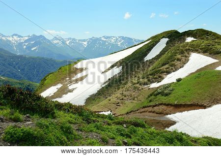 Alpine meadow with flower in Abkhazia