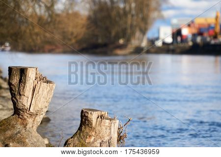 Stump in the near of a river in Regensburg
