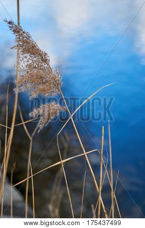 Dry grass in wind infront of a river in Regensburg
