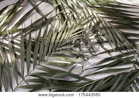 Palm leaves on a marble surface natural lighting from a window background