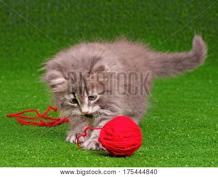 Little kitten playing with ball of wool on artificial green grass