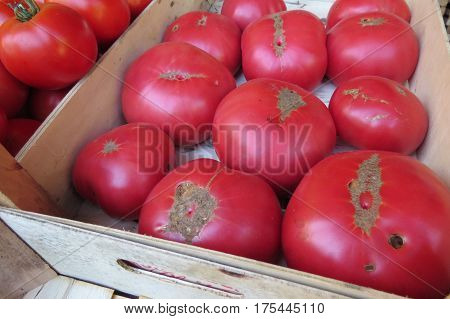 Fresh pink tomatoes at the market in Bar-city, Montenegro