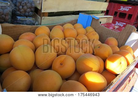 Fresh big apricots at the market in Bar-city, Montenegro