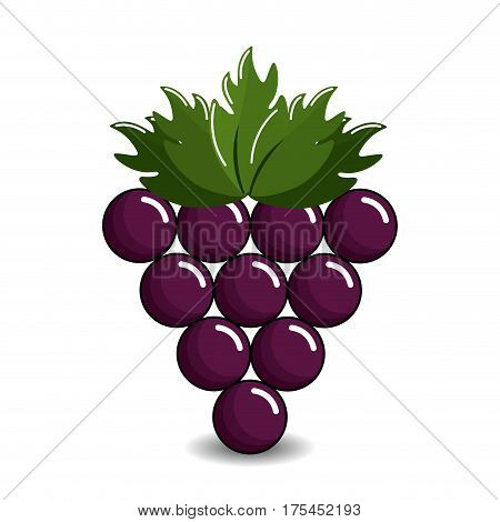 grape cluster icon image, vector illustration design