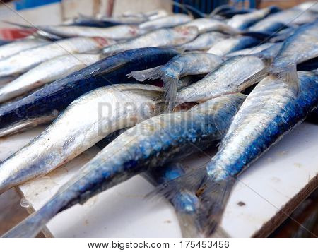 Freshly caught sardines for sale at fish market in Morocco