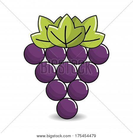 grapes fruit icon image, vector illustration design stock
