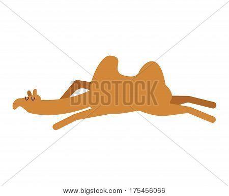 Sleeping Camel. Animal Of Desert Is Asleep. Sleepy Beast