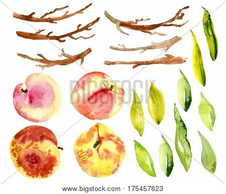Set peaches, fruit, leaves, branches. Hand drawn watercolor of fruit on a white background. Isolated object. Designs for packaging food, juice, soaps, cosmetics, menu