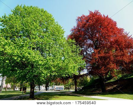 Red foliage and green foliage trees in the public park of Klagenfurt, Austria