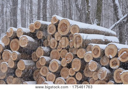 Snow covered pile of logs at an Amish sawmill