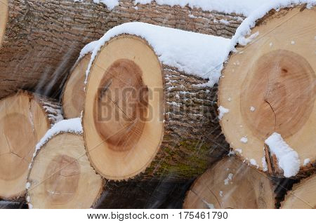 Closeup on the cut ends of a Snow covered pile of logs at an Amish sawmill