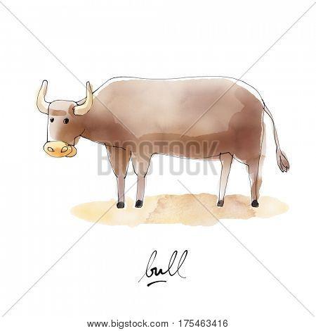 Bull Watercolor illustration