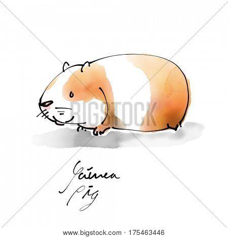 Guinea Pig Watercolor illustration