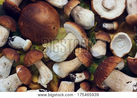 mushrooms scattered on the table top view. still life with mushrooms. Boletus luteus.