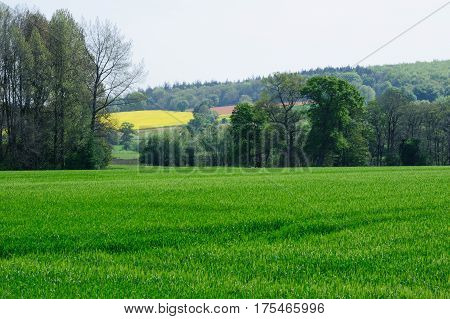 Beautiful view on colourful Spring fields In Ireland
