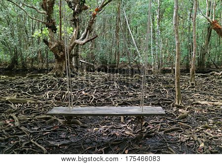 Wooden Swing in the Mangrove Forest with Awesome Tree Roots, Thailand